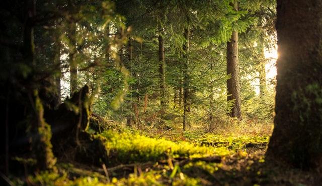 Príroda je naším mentálnym defibrilátorom